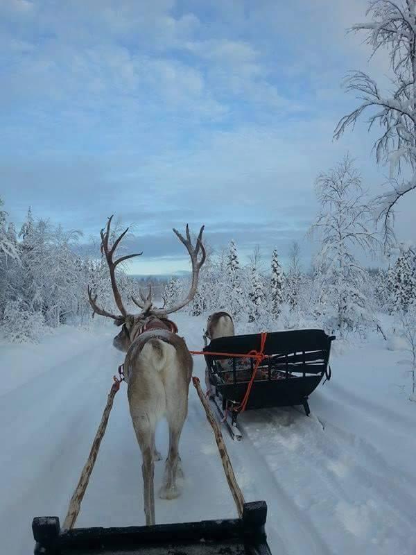 Reideer sleigh ride