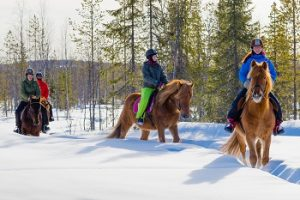 winter_finnhorse